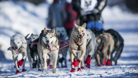 The Incredible Iditarod