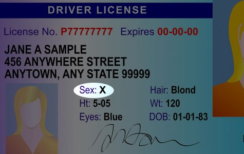 Non-Binary State Issued Licenses