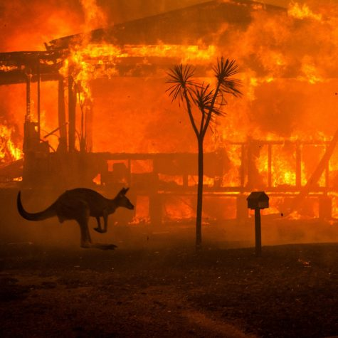 Fires Destroy Billions of Acres In Australia