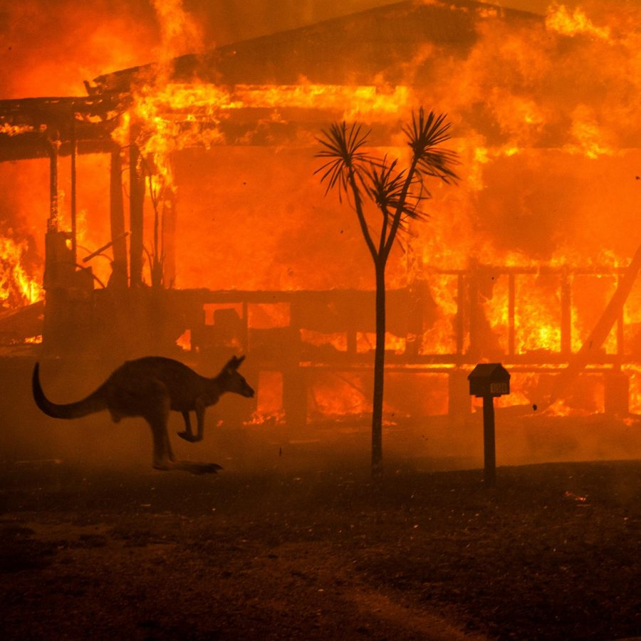 Fires+Destroy+Billions+of+Acres+In+Australia