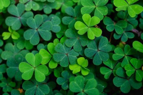 The Americanization of an Irish Holiday: St. Patrick's Day