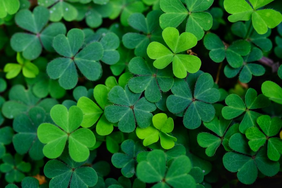 The Americanization of an Irish Holiday: St. Patrick's Day